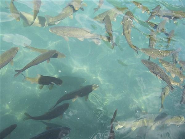Urfa Balıklıgöl