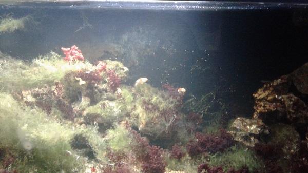 keçiören deniz dünyası